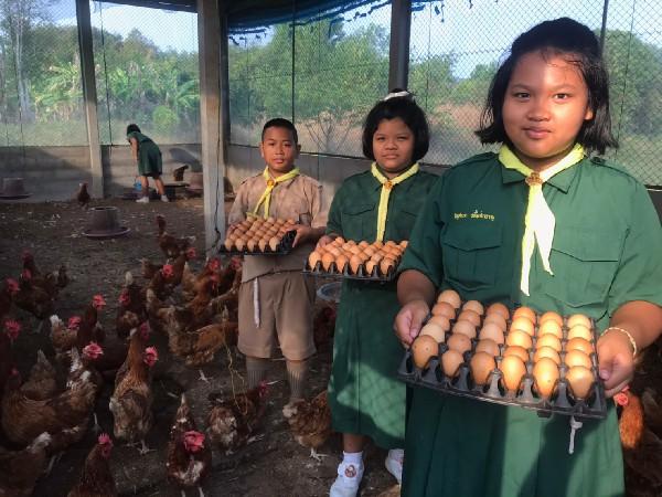 โครงงานอาชีพ  ไก่ไข่